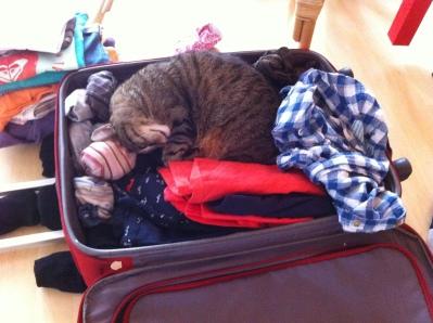 Koffer und Taschen sind einfach toll